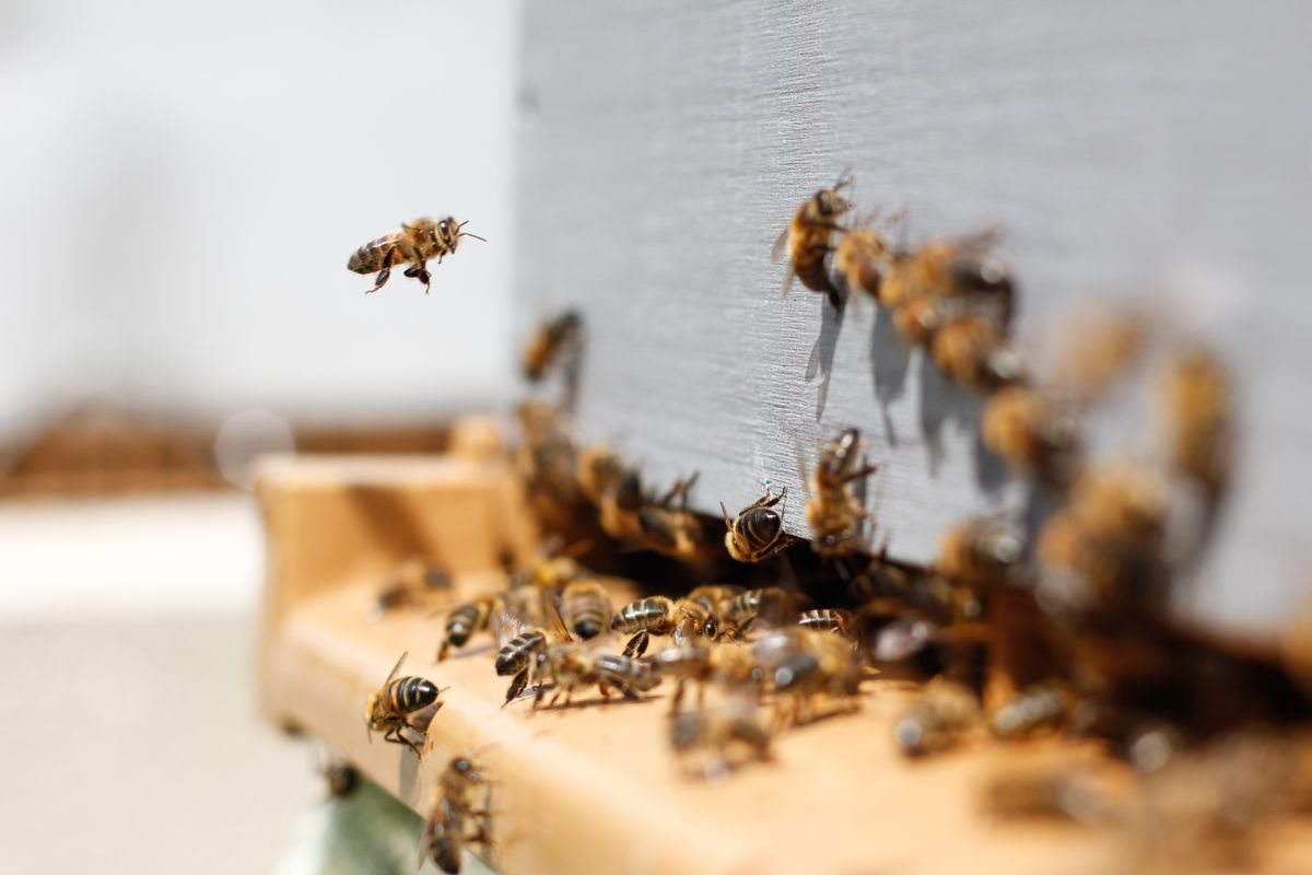 Study: low doses of the insecticide, Imidacloprid, cause blindness in insects