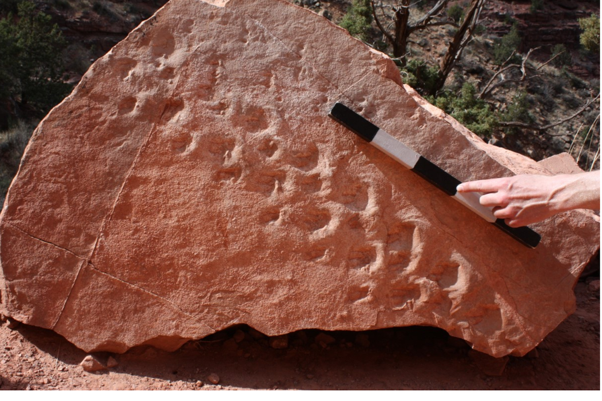 Fallen Boulder Reveals 313 Million-Year-Old Fossil Footprints At Grand Canyon