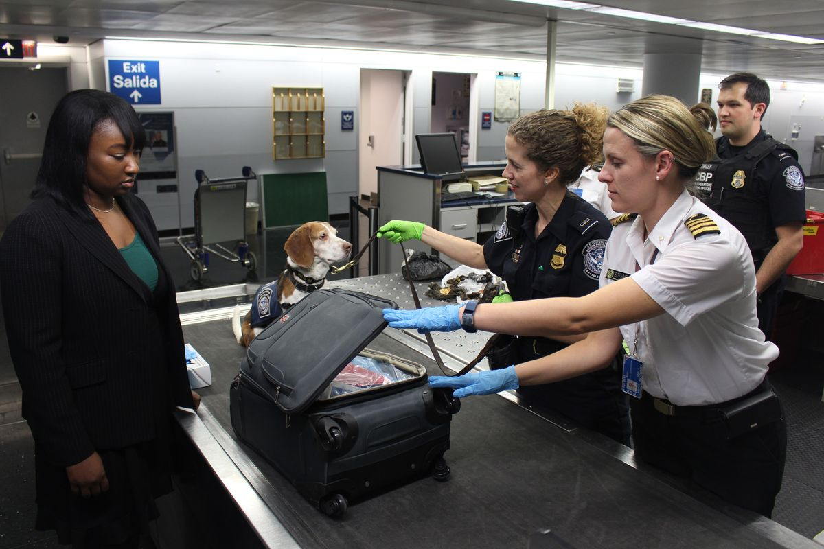 Helsinki airport tests usage of sniffer dogs to detect Covid-19