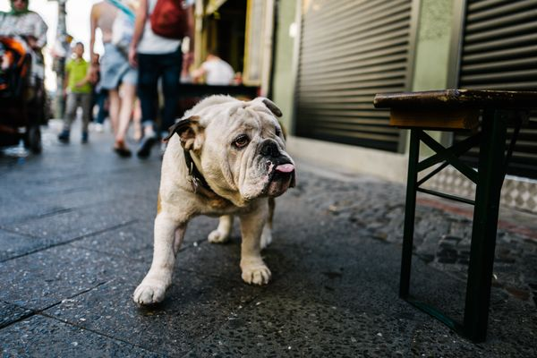 Germany to amend the law to require dogs to be walked twice a day