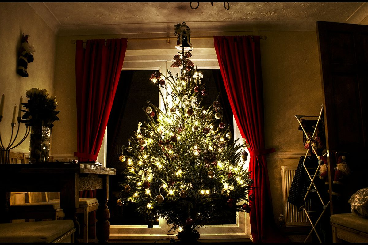 UK faces shortage of Christmas trees due to Covid-19 export restrictions from Denmark