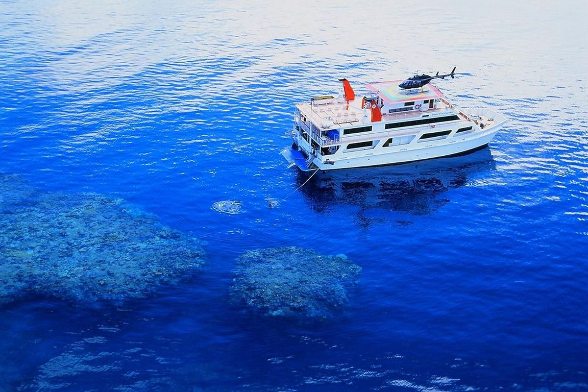Coral reef in the Great Barrier Reef, Australia discovered