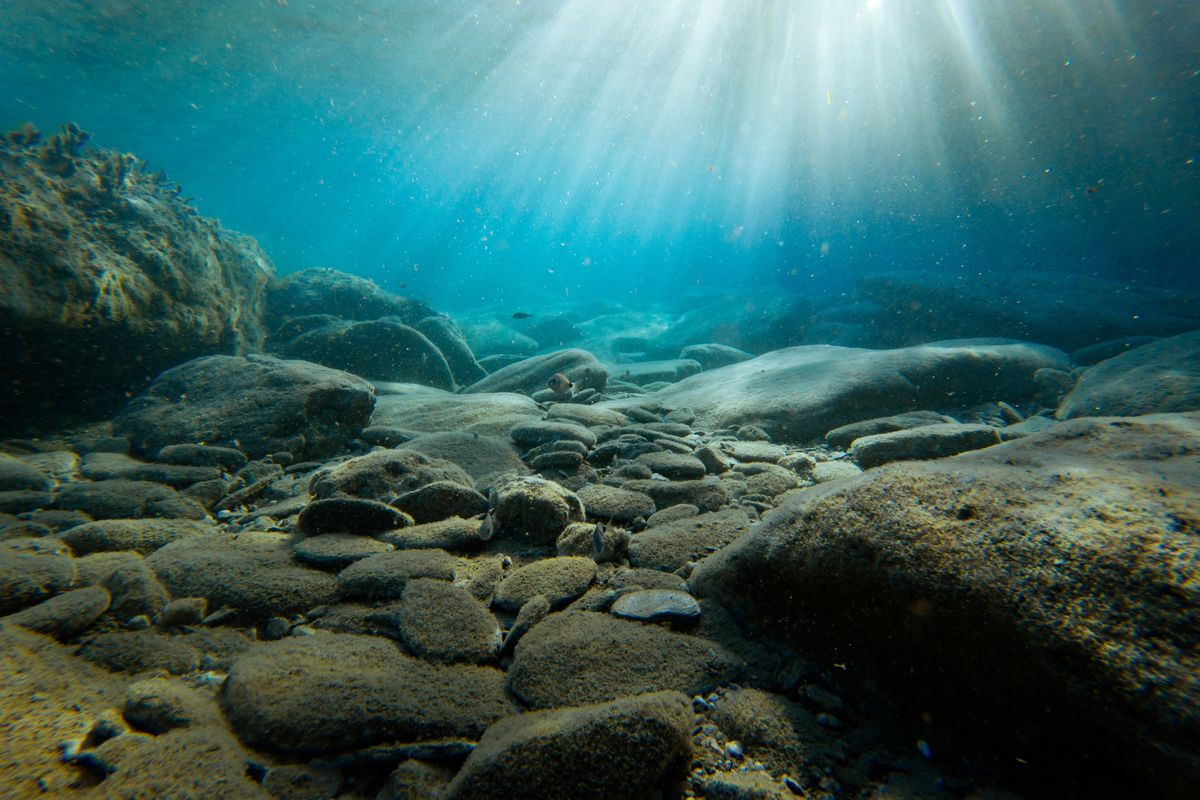 Fourth-largest marine protected area in the world created in the South Atlantic