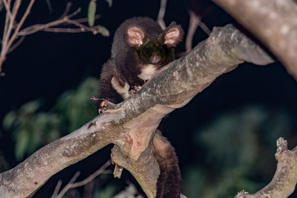 Scientists discover new mammals in Australia