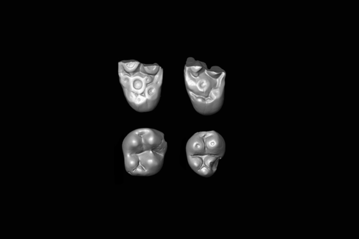 Ancient teeth from Peru hint now-extinct monkeys crossed Atlantic from Africa