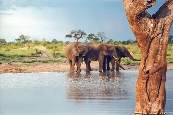 Elephants at a water hole in the Hwange National Park, Zimbabwe