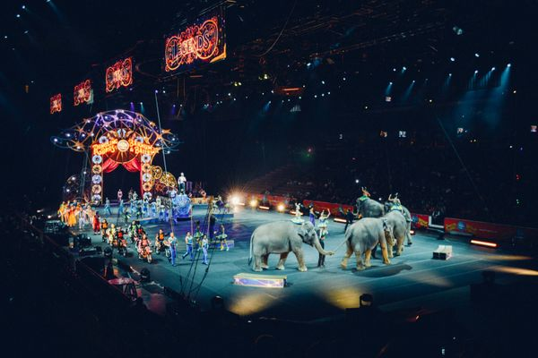 France plans to ban the use of wild animals in marine parks and circuses