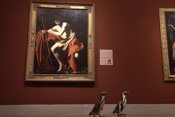Penguins at the Art Museuzm
