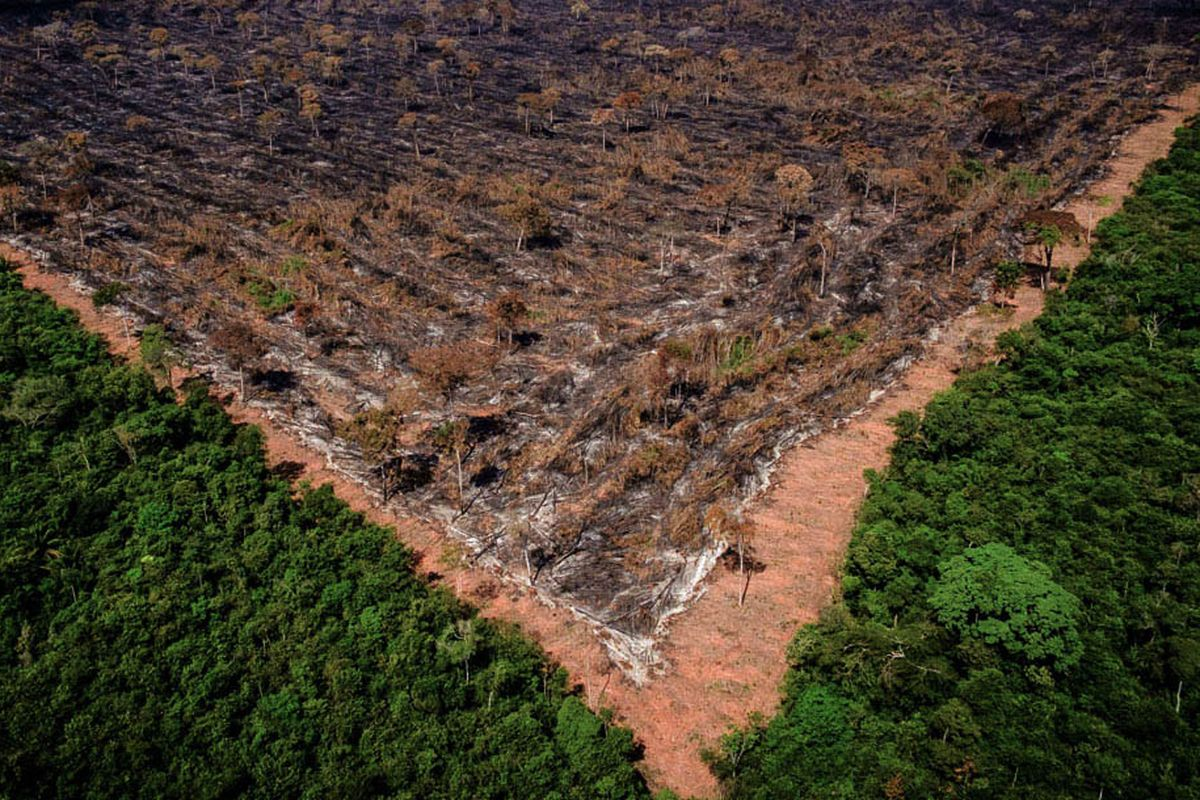 New evidence links Brazil meat giant JBS to Amazon deforestation