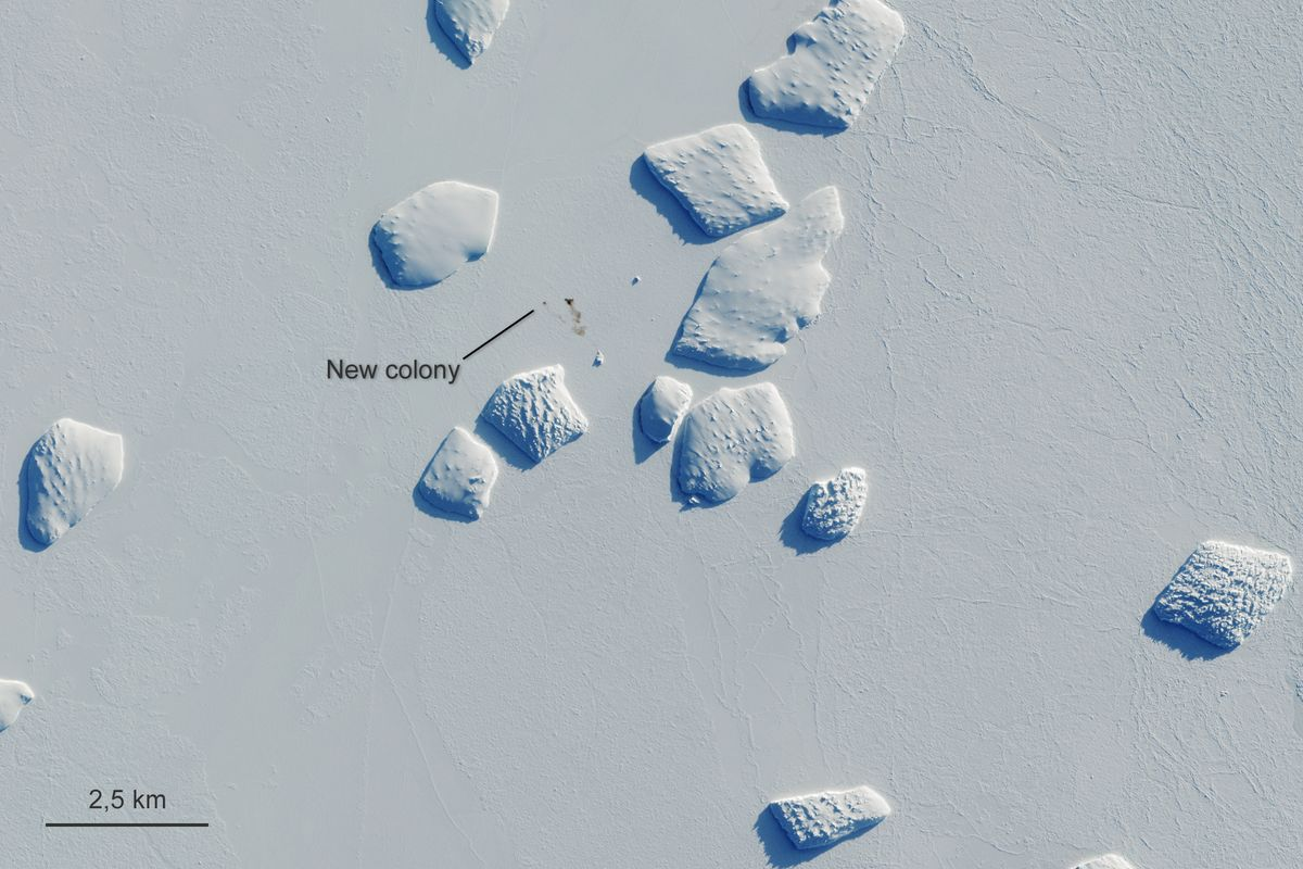 New Emperor penguin breeding sites have been found by satellites
