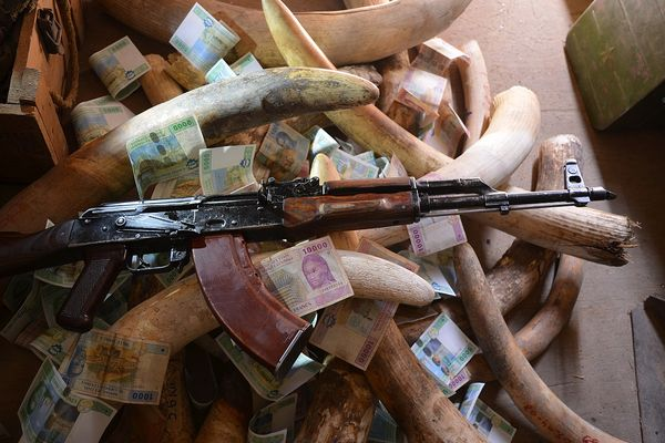 Malawi: Nine jailed over wildlife crimes
