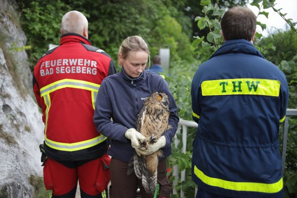 Owl rescued out of 40 metres deep airless well
