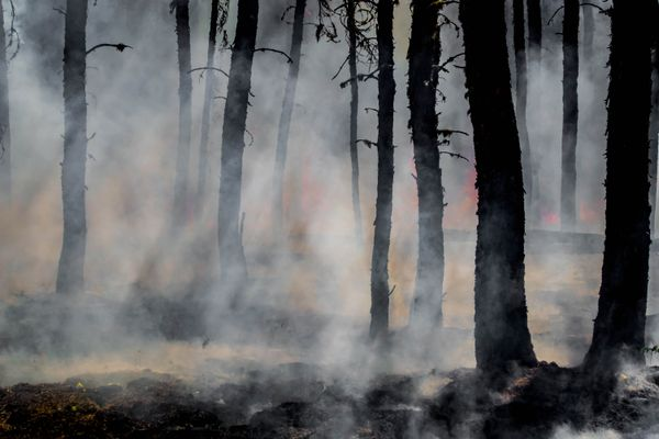 Over two dozens wildfires in California - multiple dead, thousands on the run